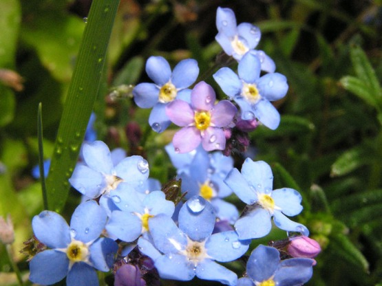 flowers_mayflowers.jpg
